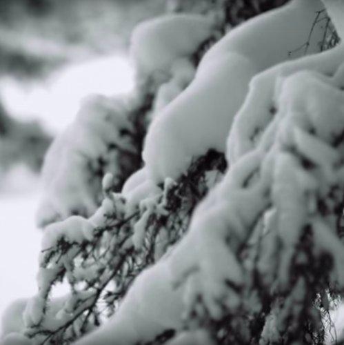 mysnowmaps - Bella nevicata in Trentino, Veneto e Friuli